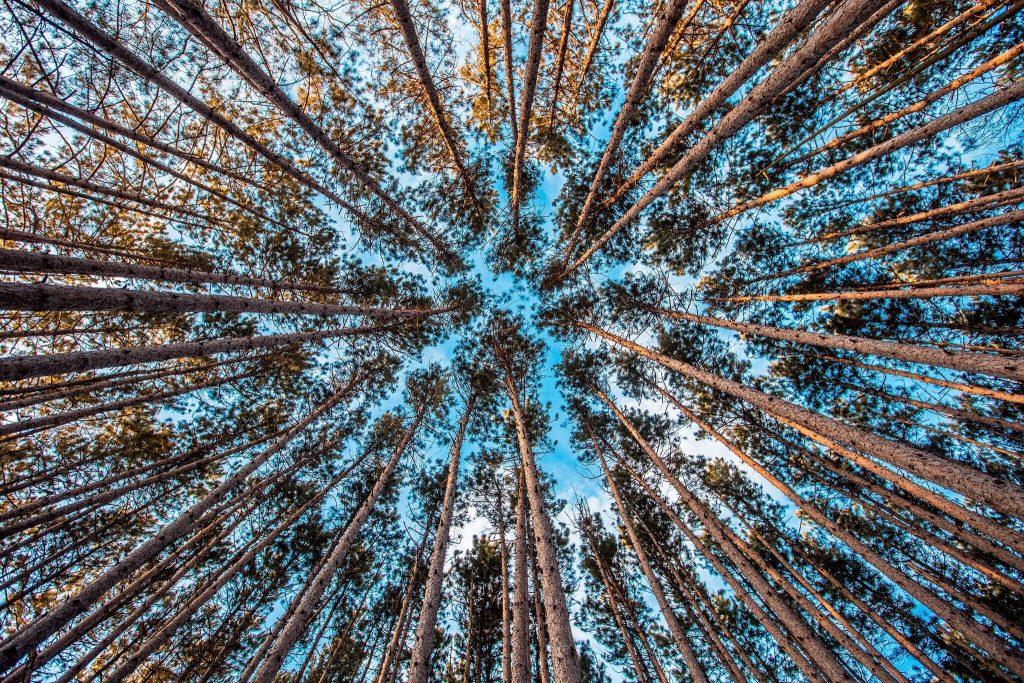 ecologie et digital